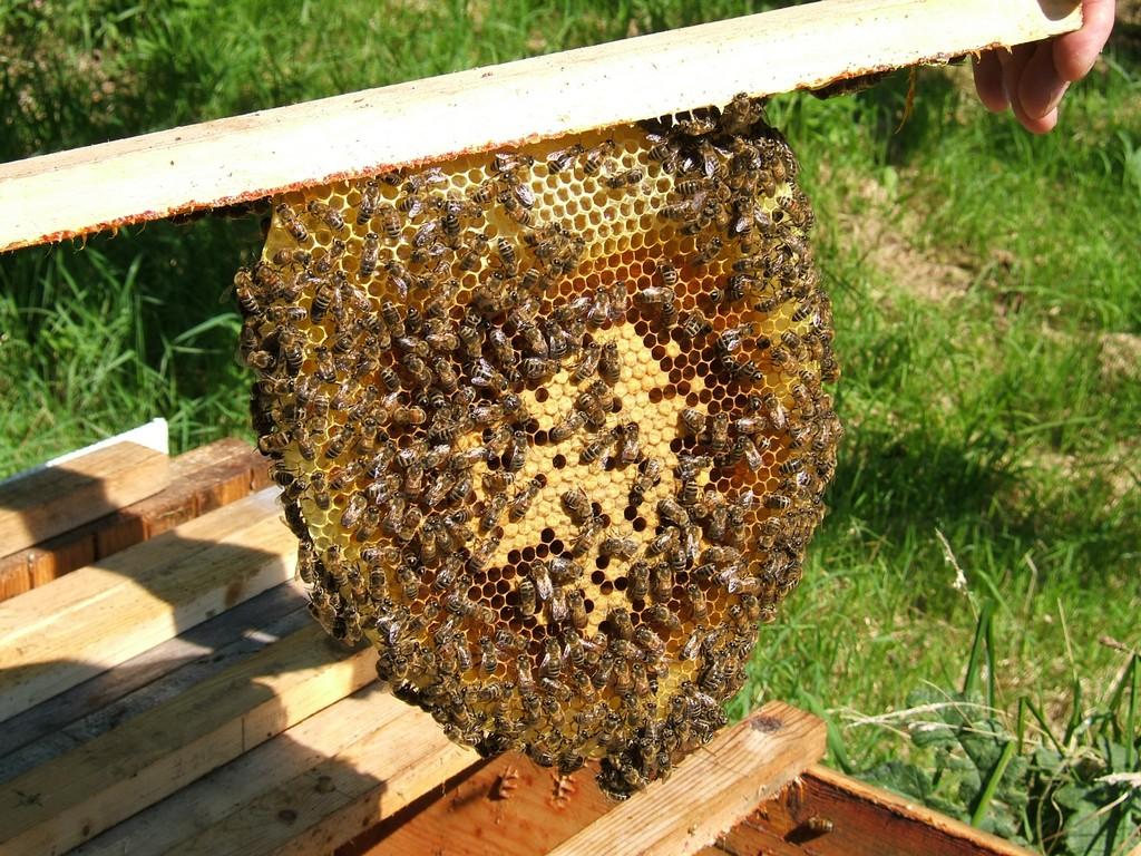 Домик для пчел как сделать 97